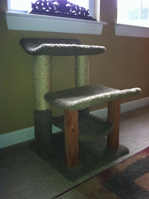 small scratching post used at Carolina Blues Cattery