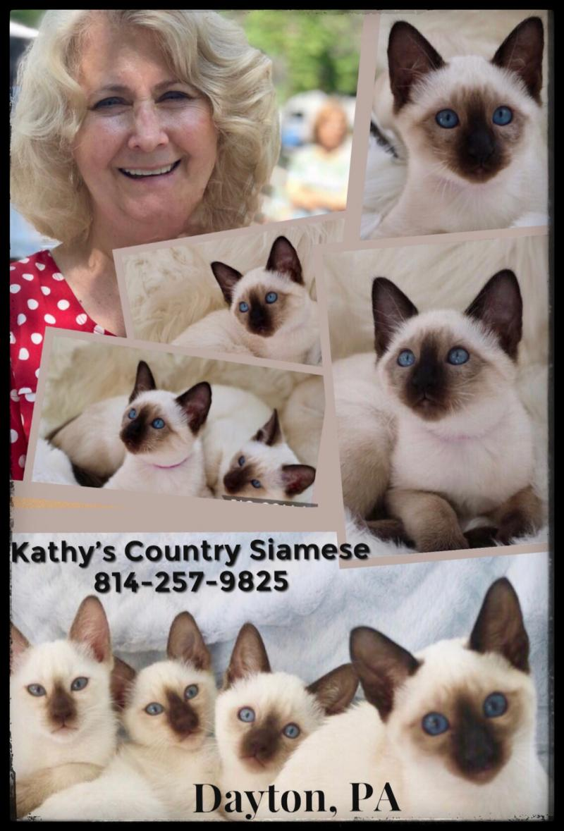 Kathys Country Siamese